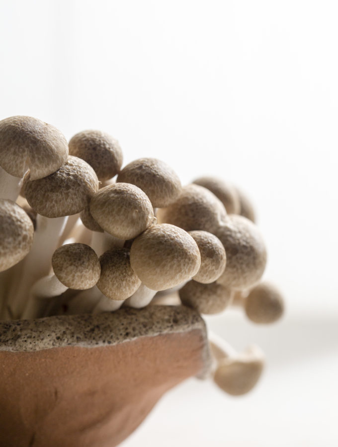 STILL LIFE - MUSHROOMS